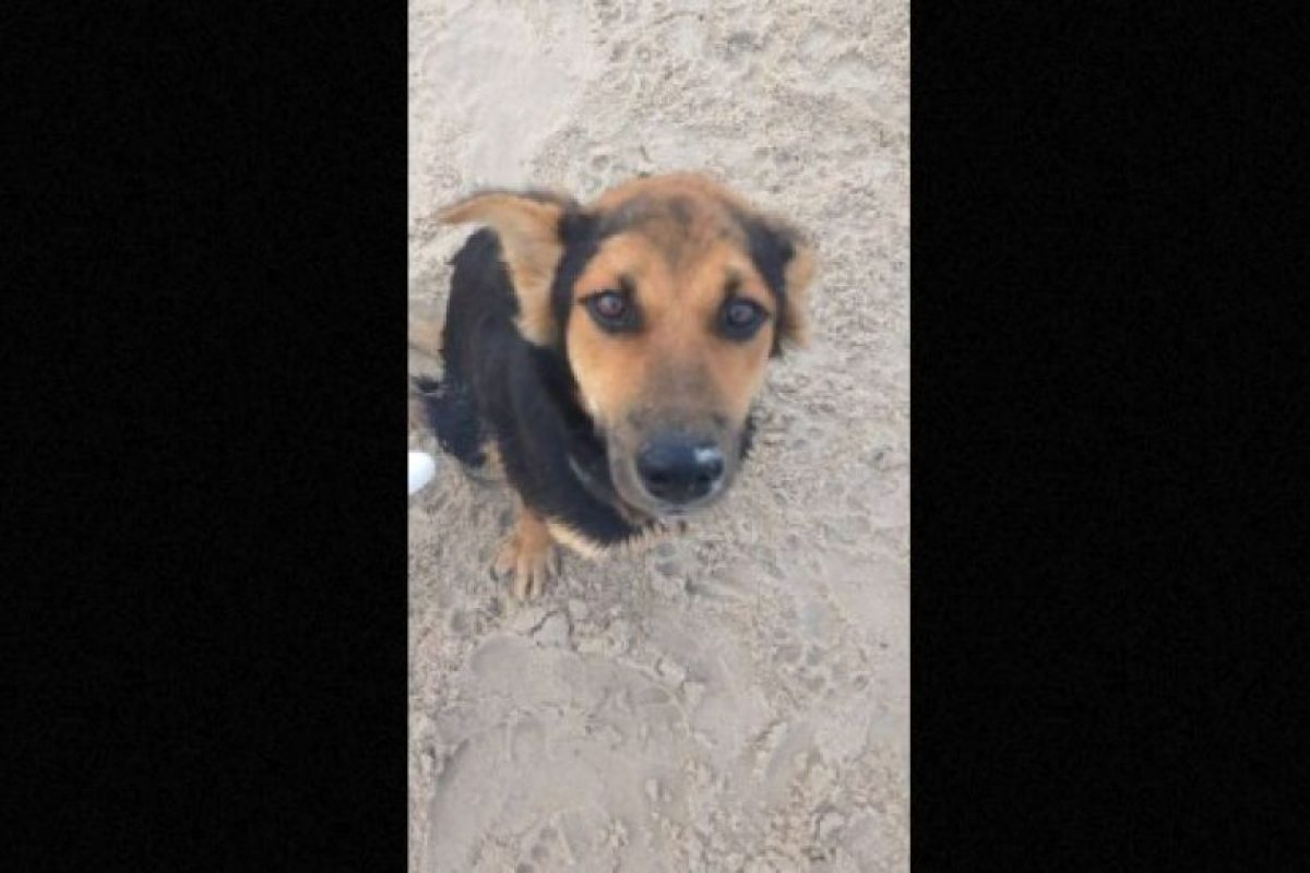Meagan Peman, una modelo canadiense, caminaba en una playa de Tailandia y encontró a un perro paralítico que luchaba por caminar. Prácticamente, sus piernas estaban dormidas y por la fricción, ya tenía heridas en la piel. Foto:Facebook.com/HelpSaveLeo