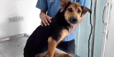 Conmovida, decidió contactar a los servicios de rescate de la zona, pero estos no podían quedarse con el perro. Foto:Facebook.com/HelpSaveLeo