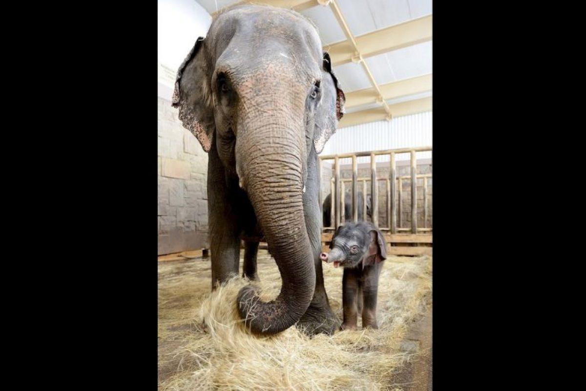 A los pocos días de nacido, sus cuidadores aún no le encuentran un nombre. Foto:Vía facebook.com/tierparkberlin