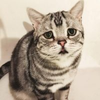 """Por esto, es llamado el """"gatito más triste del mundo"""". Foto:Vía twitter.com/lanlan731"""