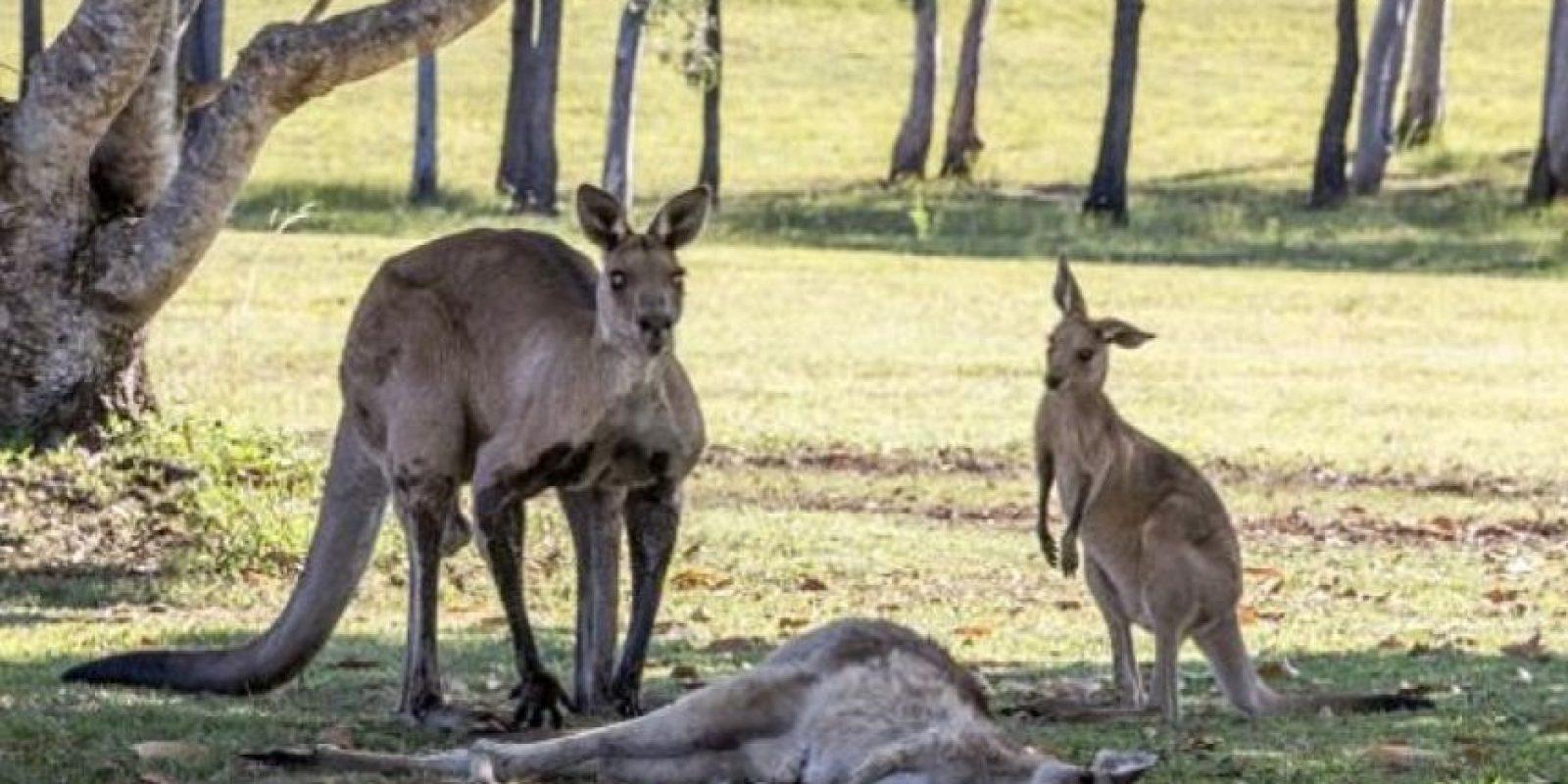 Esta escena se hizo viral. Pasó en Queensland, Australia. Foto:vía Ewan Switzer