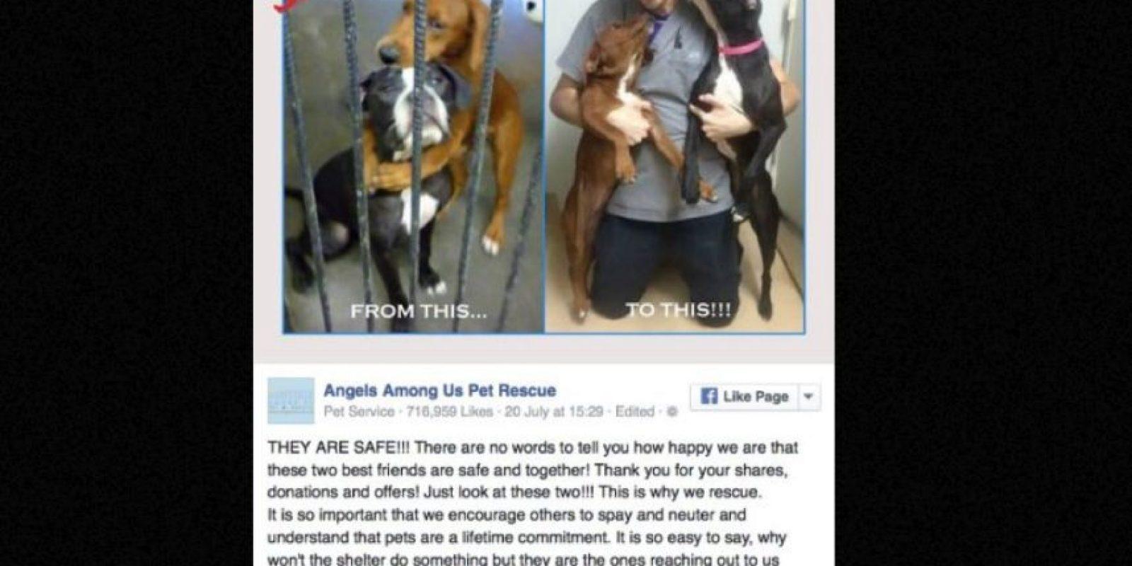 El caso causó tal revuelo, que terminaron siendo adoptadas. Foto:vía Facebook