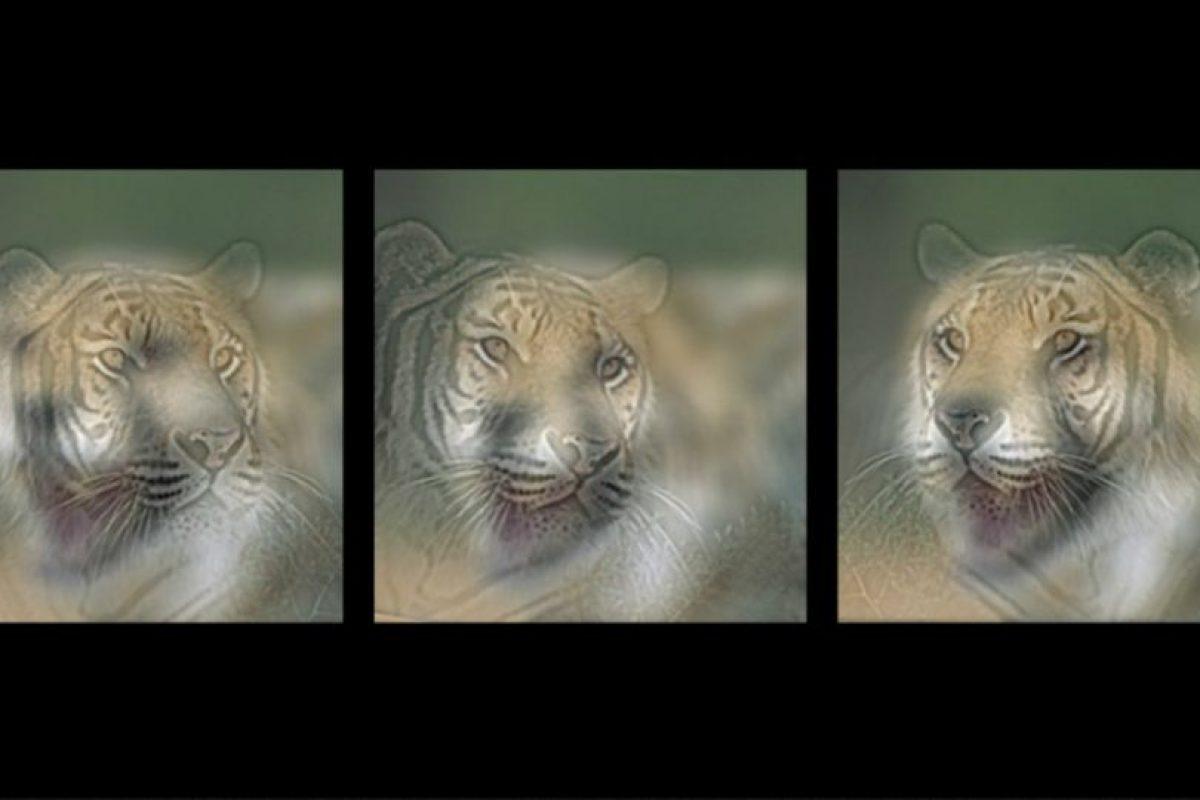 Estás imágenes híbridas son parte de un experimento Foto:mit.edu – Aude Oliva