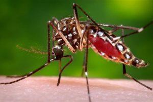 Se recomienda evitar a toda costa la picadura del mosquito Foto:AP