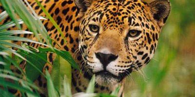 """""""Vive y deja vivir"""", campaña contra la caza y venta de animales"""