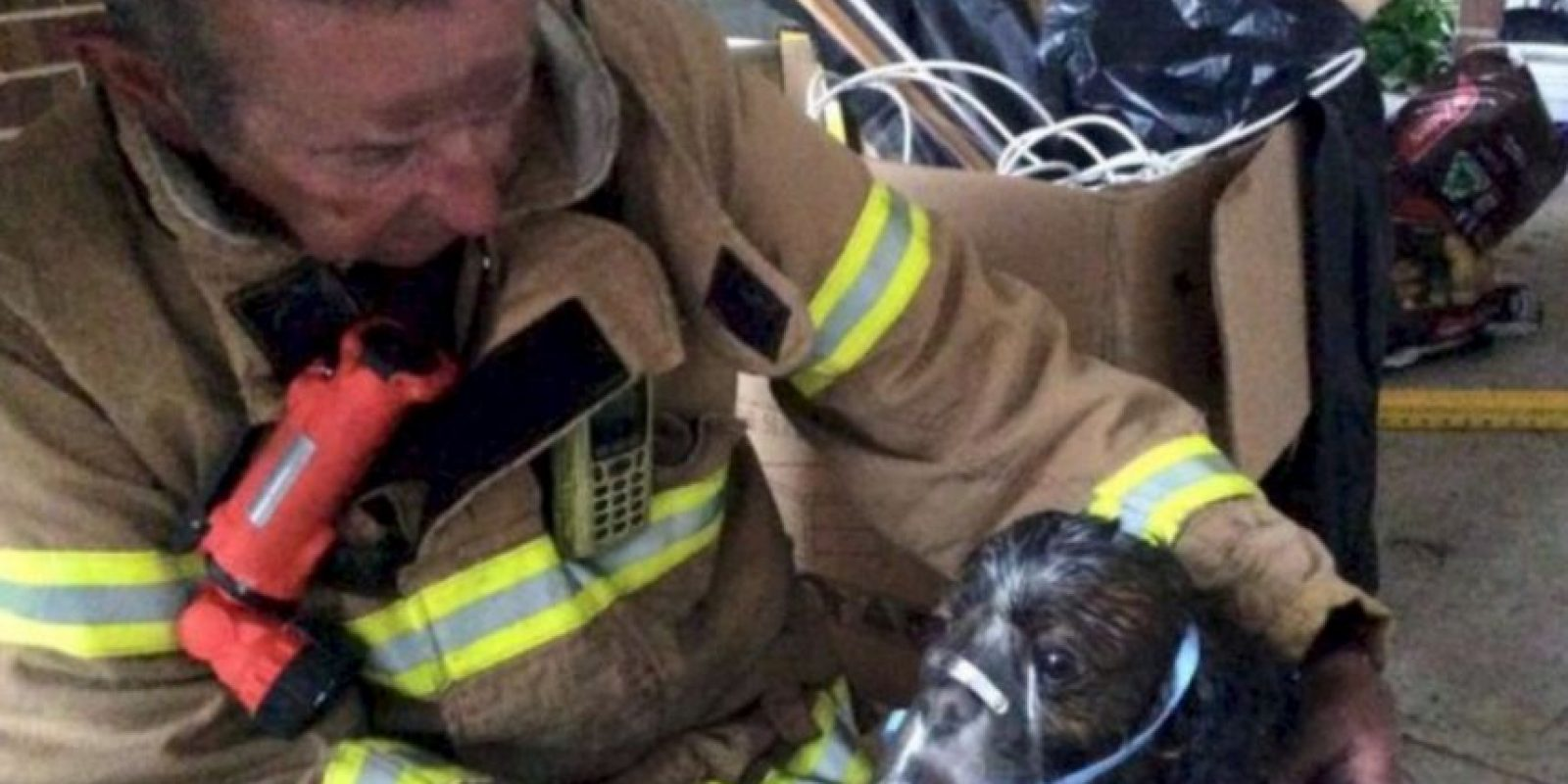 Cuando controlaron el fuego, pudieron encontrar al cachorro. Foto:facebook.com/Melbourne.MFB