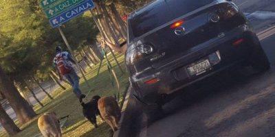 Así reaccionaron los usuarios ante este paseo de perros que causó tráfico