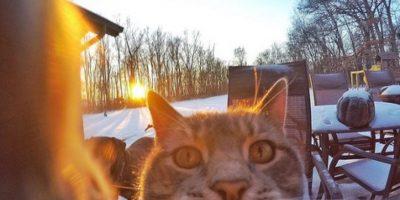 Conoce al gato que se hizo viral en las redes sociales