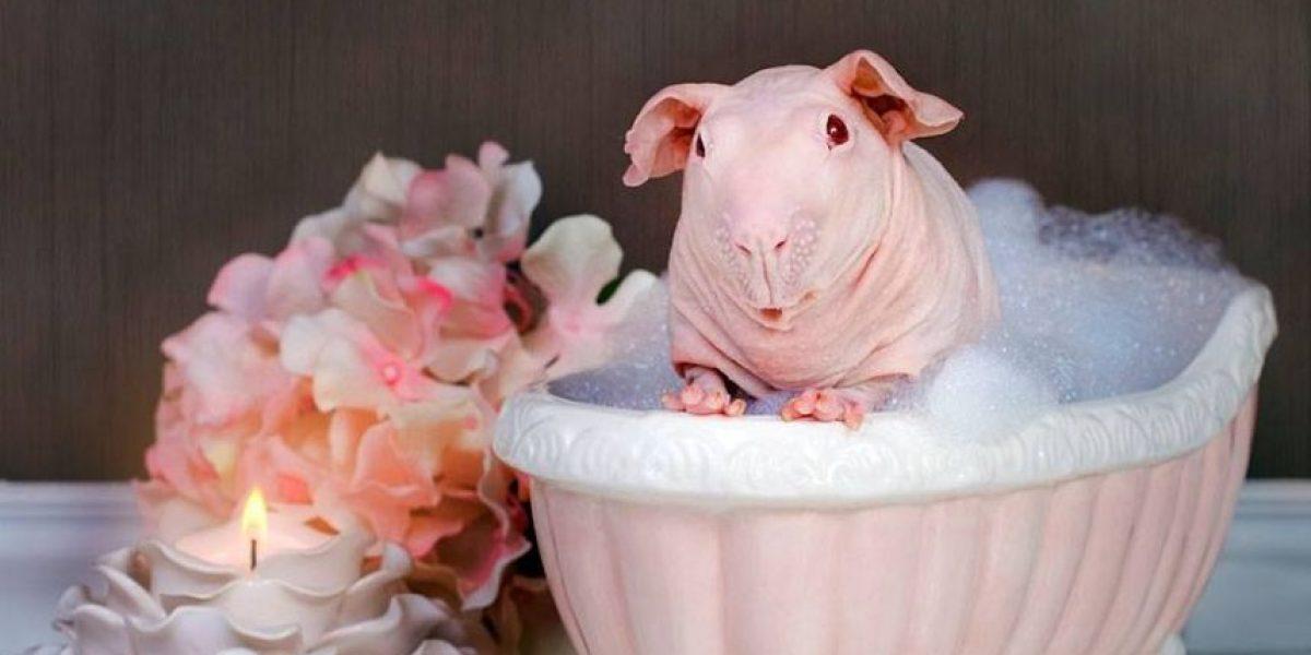 """""""Al Desnudo"""", Exótico proyecto de fotografía muestra este animal al desnudo"""
