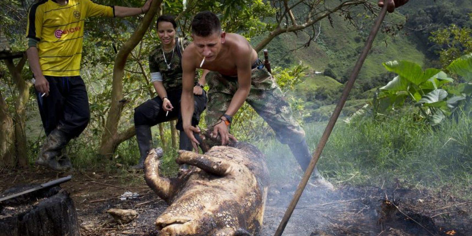En esta imagen, tomada el 4 de enero de 2016, Harrison, un combatiente rebelde del frente 36 de las Fuerzas Armadas Revolucionarias de Colombia, o FARC, arrastra el cuerpo de un cerdo hasta una hoguera, para quemarle la piel y retirarle el pelo, en su campamento clandestino en el estado de Antioquia, en los Alpes colombianos. El animal bastará para alimentar a los 26 miembros del grupo durante varios días. Foto:AP/ Rodrigo Abd