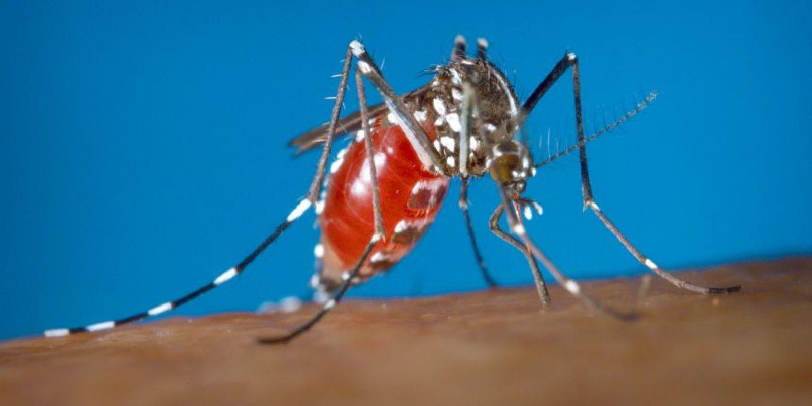 Signos y síntomas del virus Zika Foto:AP