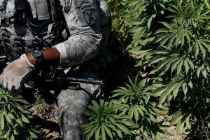 La erradicación de cultivos de cannabis en México se redujo de 5,364 hectáreas en 2013 a 2,500 hectáreas en 2014 Foto:Getty