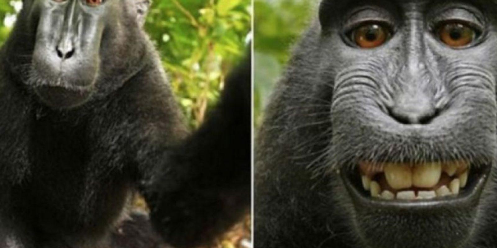 El famoso selfie del mono. Foto:Vía Instagram.com