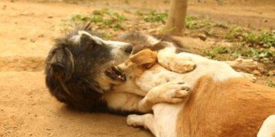 Kalu ahora es un perrito normal. Foto:vía Facebook/Animal Aid Unlimited