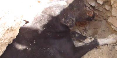 Lo dejaron ahí para morir. Foto:vía Facebook/Animal Aid Unlimited