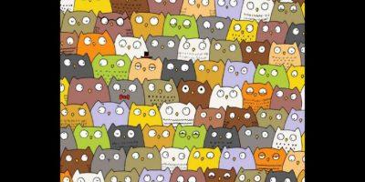 Encuentren al gato Foto:Vía Twitter