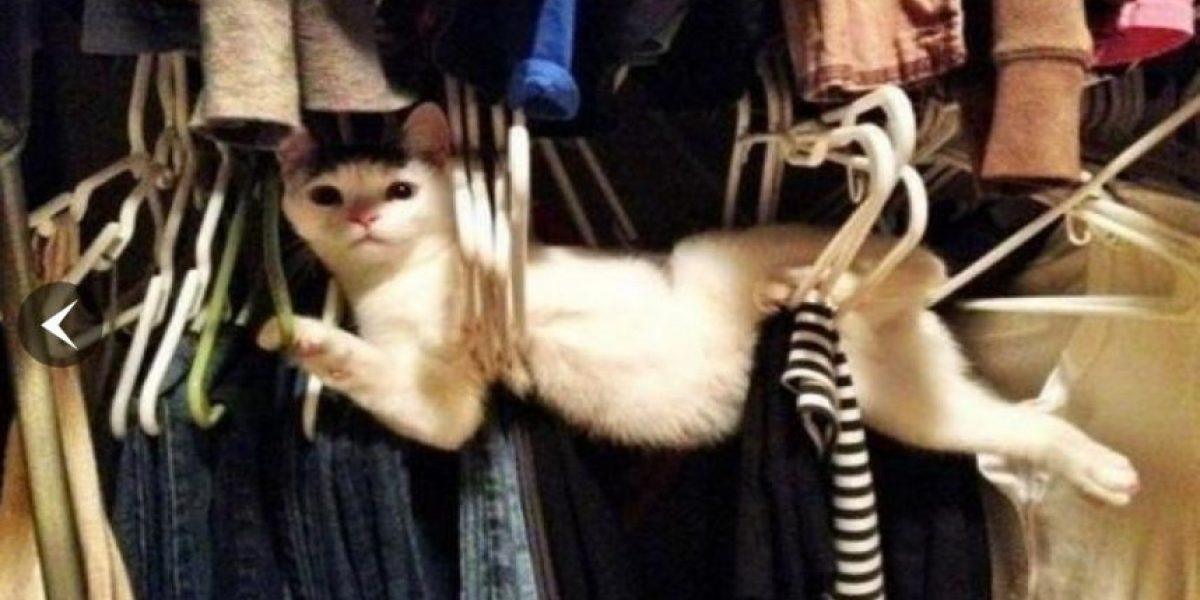 Gatito con cara de preocupación se hace viral