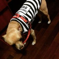 También venden disfraces para perros Foto:Instagram.com