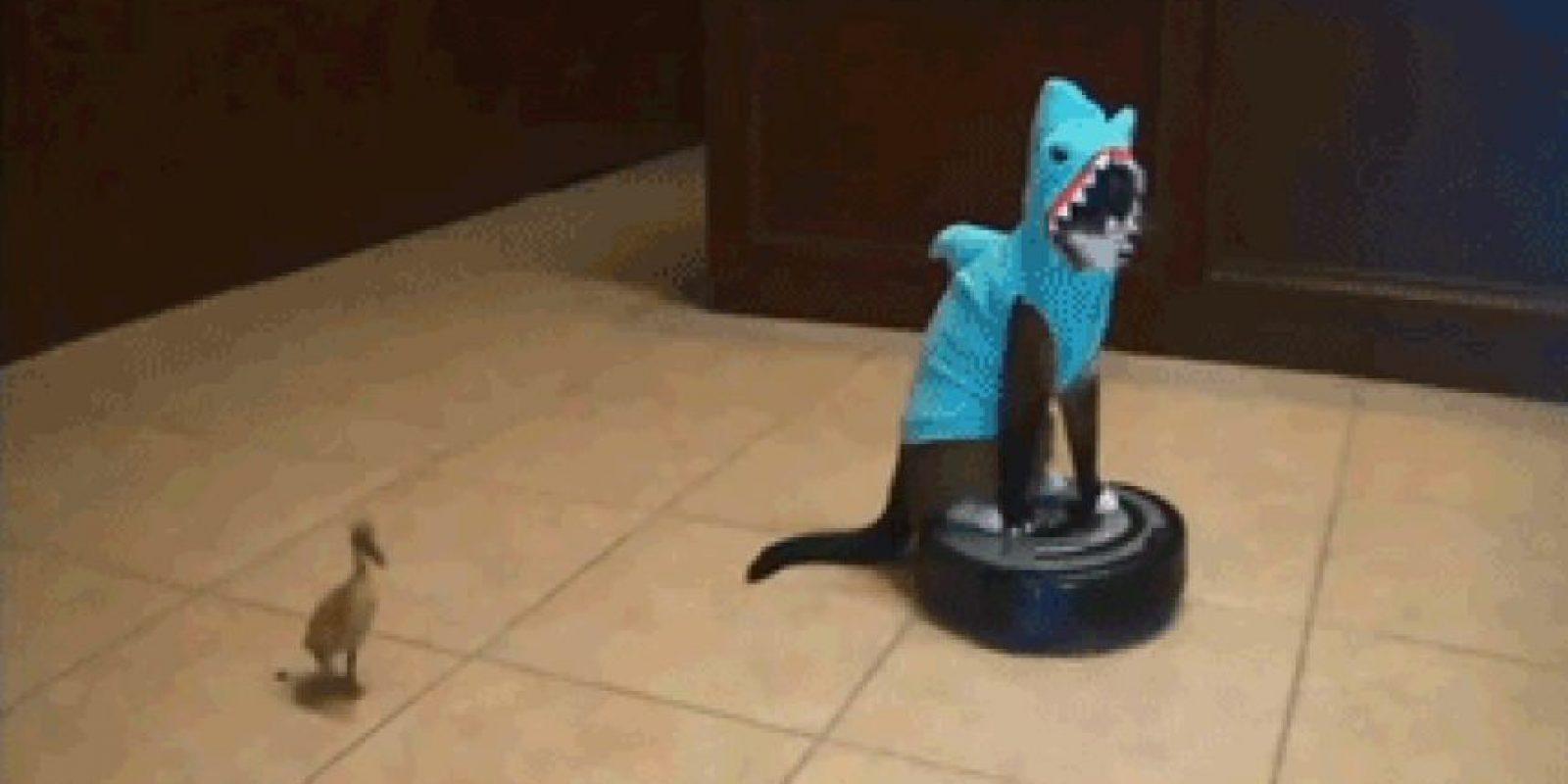 Gato-tiburón Foto:Imgur