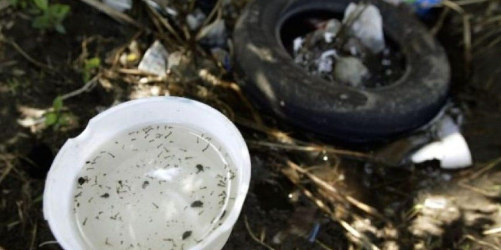 Los mosquitos no sobreviven al frío. Foto:Getty Images
