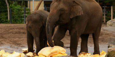 Elefantes Foto:Getty Images