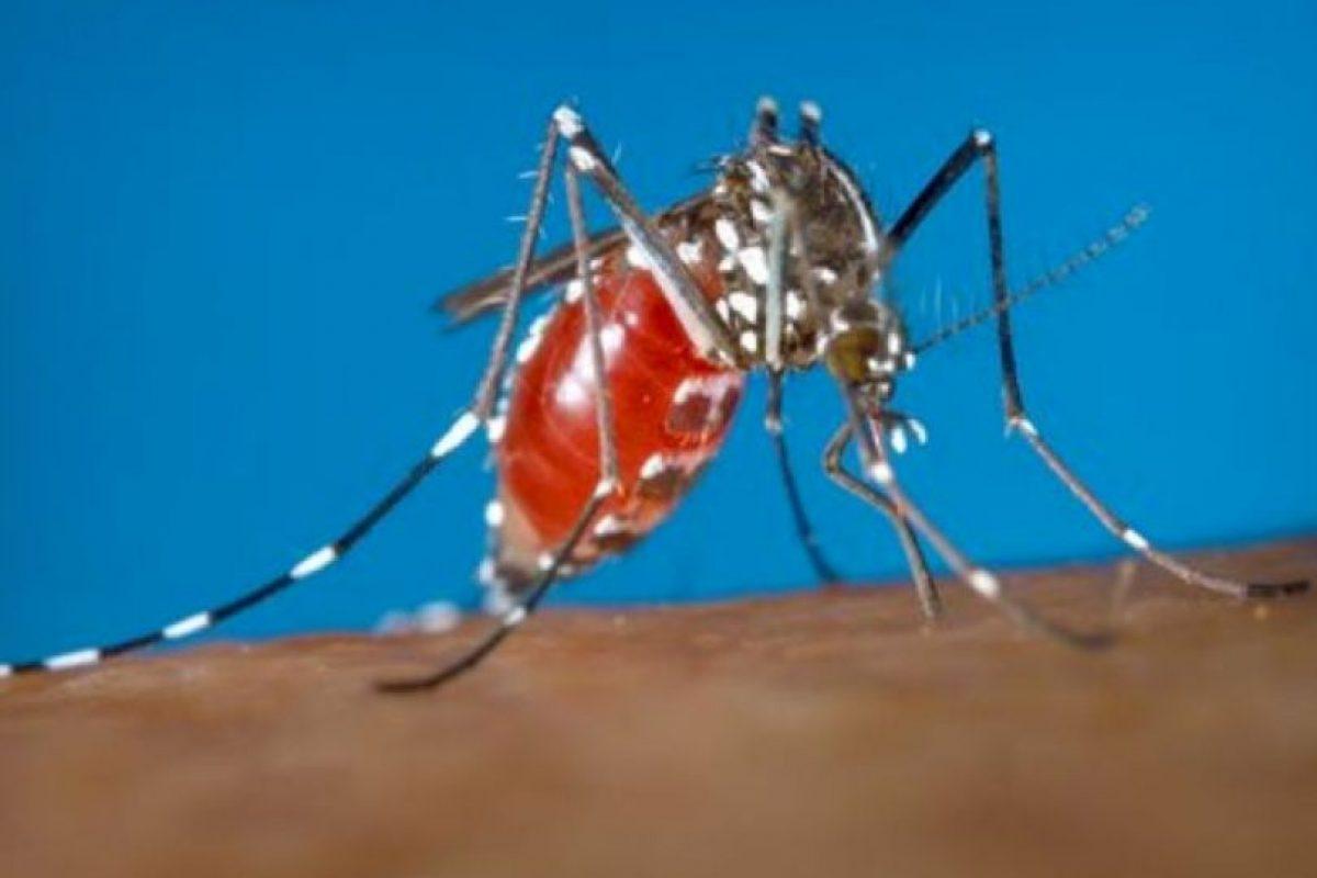 ¿Qué es el virus Zika, cómo se transmite, cuáles son sus síntomas y por qué debe preocuparnos? Ejemplos de erupciones en la piel, uno de los síntomas del virus Zika Foto:Getty Images