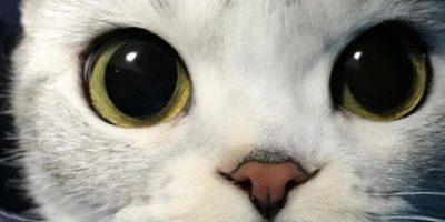 Kitty, la gata con los ojos
