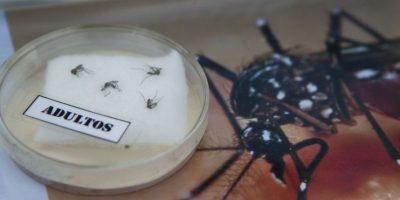 Virus Zika Foto:AFP
