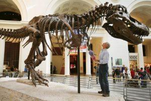 Su cráneo podía ser de 1.5 metros (5 pies) de largo. Foto:Getty Images