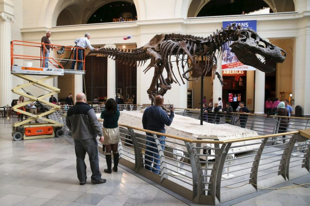Los científicos creen que este poderoso depredador podía comer hasta 230 kilogramos (500 libras). Foto:Getty Images