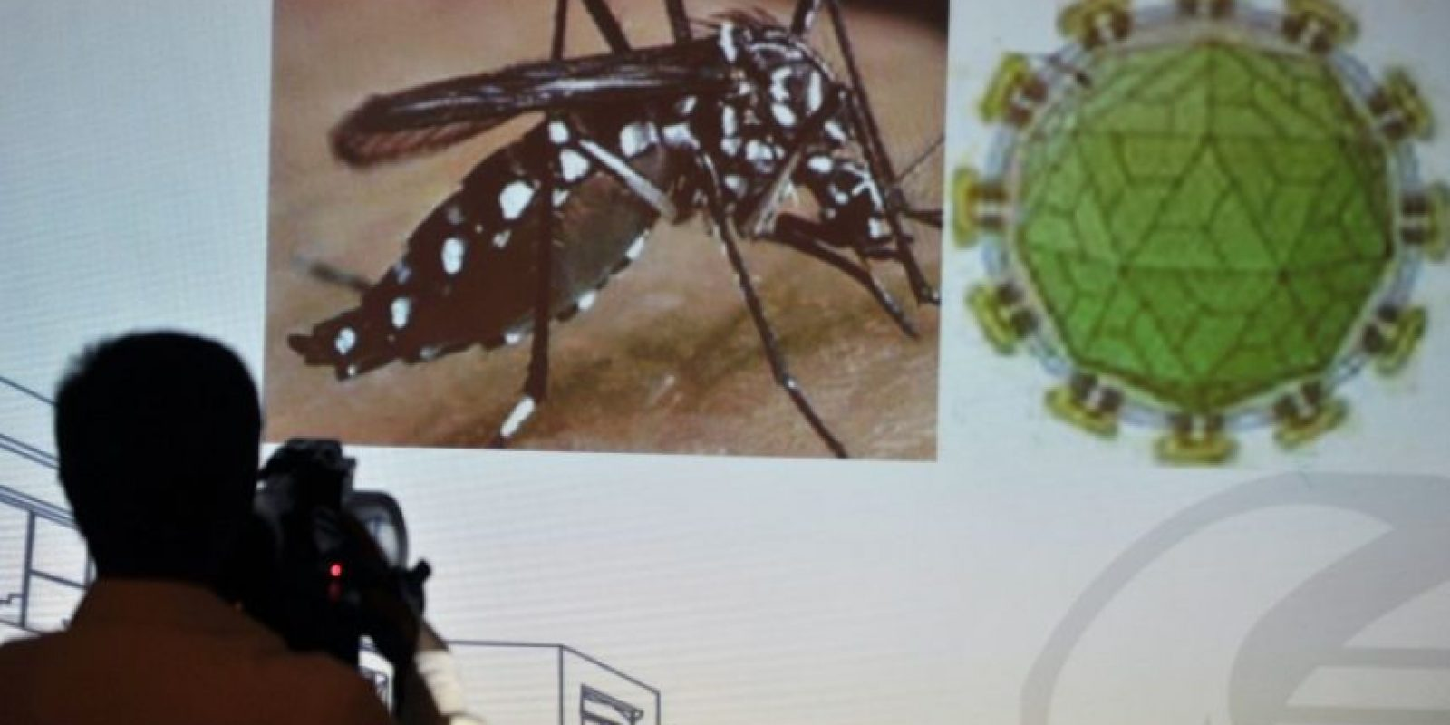 Expertos llamaron a erradicar los criaderos de mosquitos para evitar la propagación del Zika. Foto:AFP