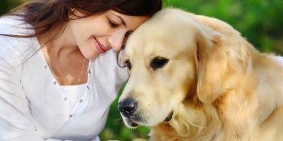 ¿Quieres saber la raza de tu perro? Esta aplicación te lo dirá