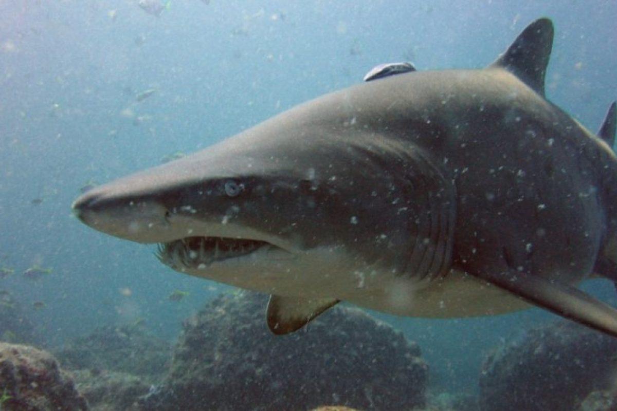 Le gustan las aguas costeras poco profundas. Foto:Wikipedia Commons