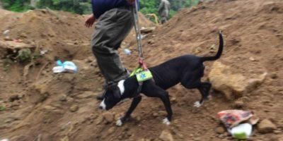 Iniciativa pretende aumentar perros rescatistas para Bomberos Voluntarios