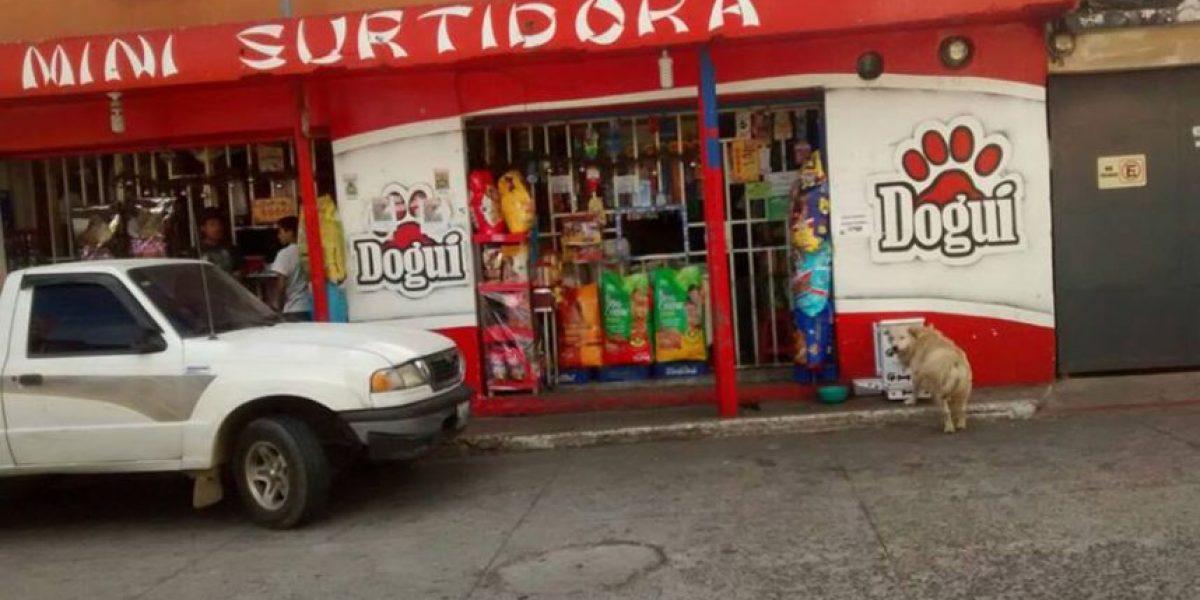 Guatemaltecos también se solidarizan con los perros