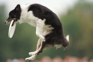 El estudio de IQ puede ser adaptado a otras especies animales Foto:Getty