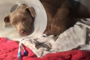 El video de su recuperación tiene más de seis millones de vistas Foto:Facebook.com/GraniteHillsVet