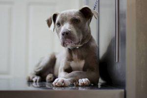 La historia de su rescate ha conmovido a Internet Foto:Facebook.com/GraniteHillsVet