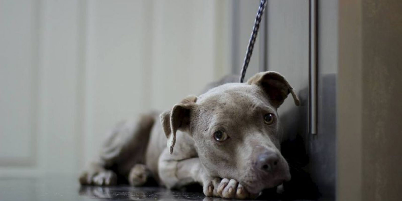 Incluso hay una campaña de recolección de fondos para pagar su tratamiento Foto:Facebook.com/GraniteHillsVet