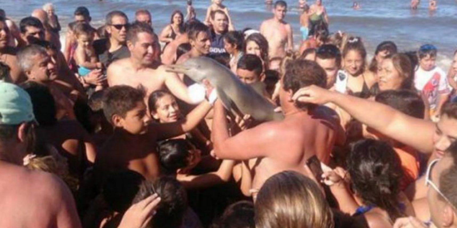 Turistas sacan del mar a un delfín bebé en Argentina. Foto:@todonoticias
