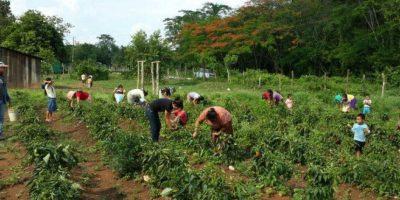 MAGA pide más tiempo para ley de Desarrollo