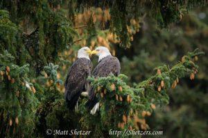 Águilas Foto:Agencias