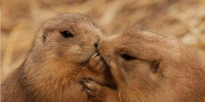 Estos 10 animales te demostrarán que la fidelidad y el amor verdadero existe