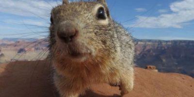 Otros animales que han tenido conflicto con la ley Foto:Getty Images