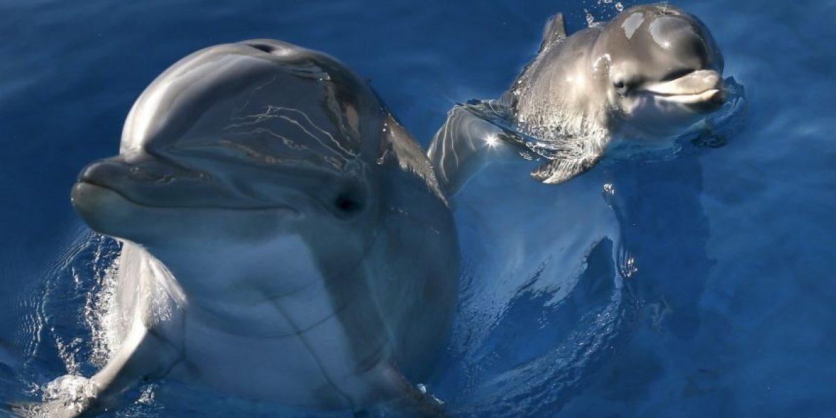 Video: Decenas de delfines quedaron varados y así reaccionaron los turistas