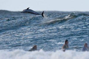 En el mundo antiguo, los delfines eran considerados criaturas cercanas a los dioses Foto:Getty Images