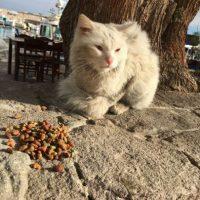 """""""Kunkush"""" viajo a la isla de Lesbos, en Grecia Foto:Twitter.com/DiasTheCat"""