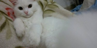 Al gato le hicieron una cuenta de Twitter llamada @DiasTheCat Foto:Twitter.com/DiasTheCat