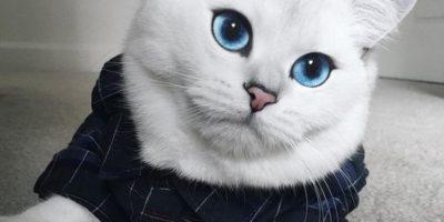"""Conoce a Coby el felino """"más hermoso del mundo"""""""