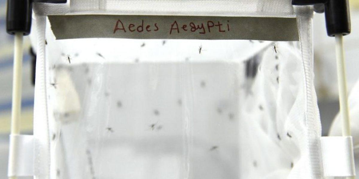 Últimas noticias del Virus del Zika en Colombia, hoy 22 de febrero de 2016